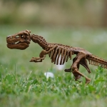 Dino Skeleton in the garden