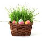 Eggs in basket of grass