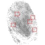 Fingerprint with identification marks