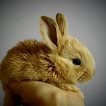 Small rabbit on hand