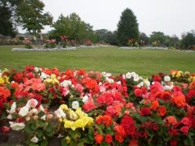 Chalkwell parks flowers