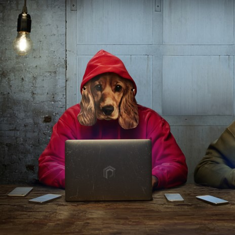 Dog wearing a red hoodie using a laptop