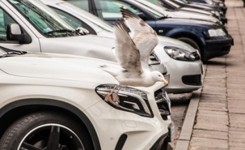 Parked cars with a seagul