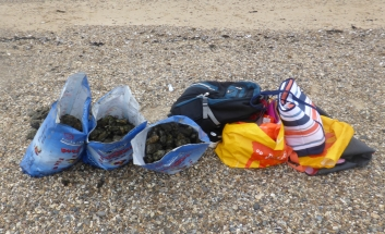 Bags of seized oysters on the beach